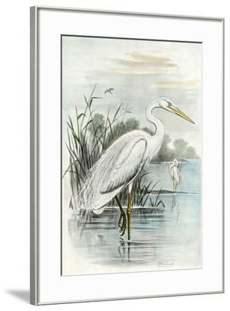 White Heron-Unknown-Framed Giclee Print