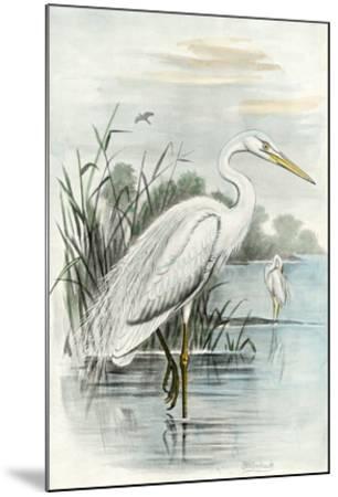 White Heron-Unknown-Mounted Giclee Print