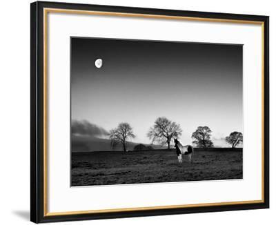 Evening Light IV-Martin Henson-Framed Giclee Print