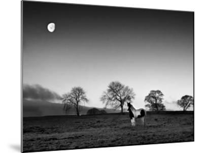 Evening Light IV-Martin Henson-Mounted Giclee Print