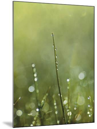 Dew-Andreas Stridsberg-Mounted Giclee Print
