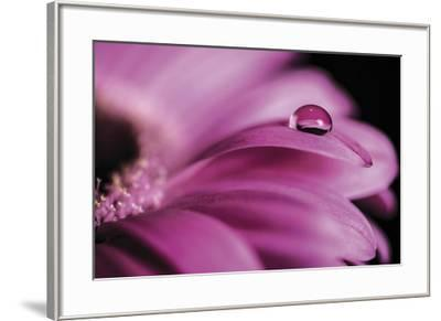 Dew Drops-Andreas Stridsberg-Framed Giclee Print