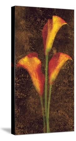 Callas-John Seba-Stretched Canvas Print