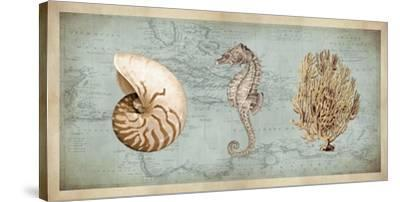 Sea Treasures I-Deborah Devellier-Stretched Canvas Print