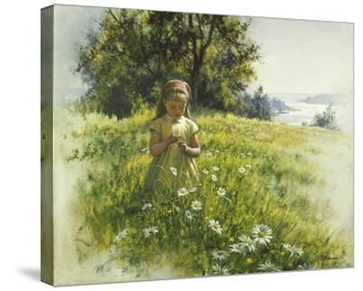 Daisy Meadow-Stephen Pearson-Stretched Canvas Print