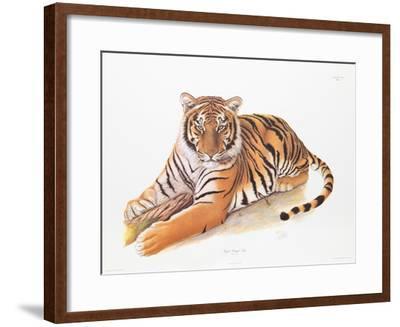 Bengal Tiger-Sean Bollar-Framed Collectable Print