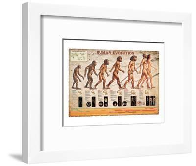 Human Evolution--Framed Art Print