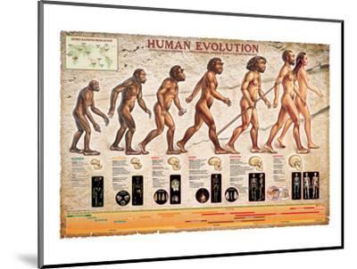Human Evolution--Mounted Art Print