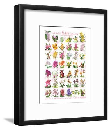 Orchids--Framed Art Print