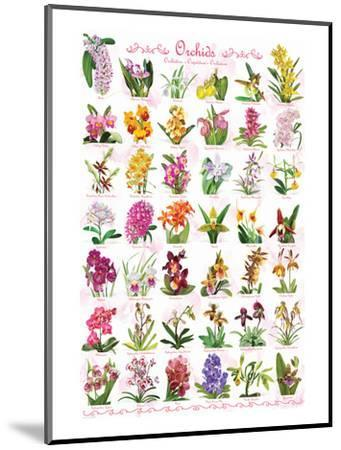 Orchids--Mounted Art Print