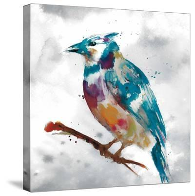 Blue Jay-Stephane Fontaine-Stretched Canvas Print