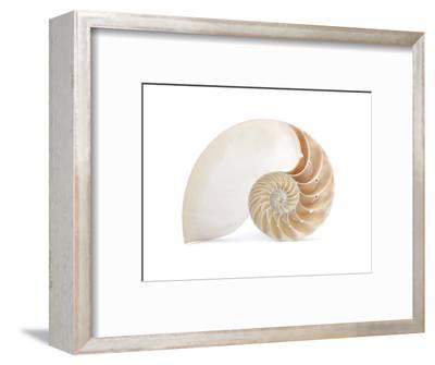Fibonacci Pattern in a Shell--Framed Art Print