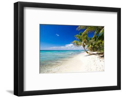 Palm Trees on Tropical Beach--Framed Art Print