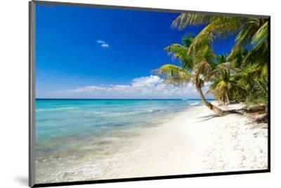Palm Trees on Tropical Beach--Mounted Art Print