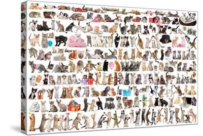 World of Cats--Stretched Canvas Print