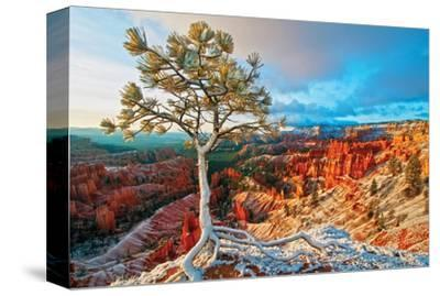 Grand Canyon - Winter Sunrise--Stretched Canvas Print
