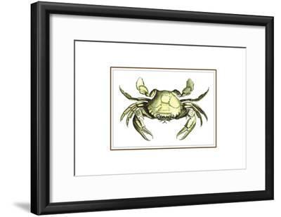 Soft Shell-Sheldon Lewis-Framed Art Print