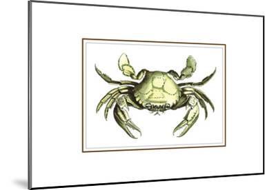 Soft Shell-Sheldon Lewis-Mounted Art Print