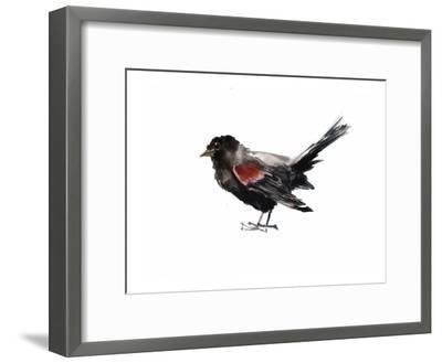 Red Winged Blackbird-Suren Nersisyan-Framed Art Print
