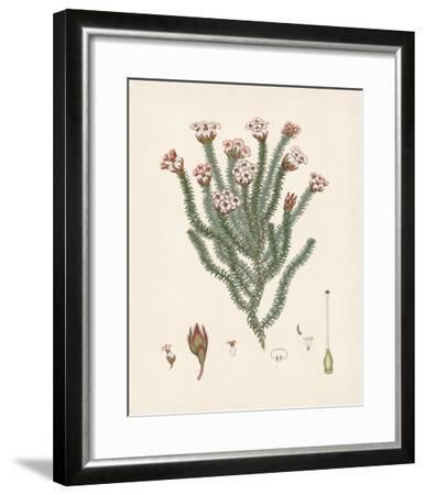 Erica Obata-The Vintage Collection-Framed Giclee Print