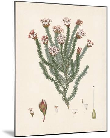 Erica Obata-The Vintage Collection-Mounted Giclee Print