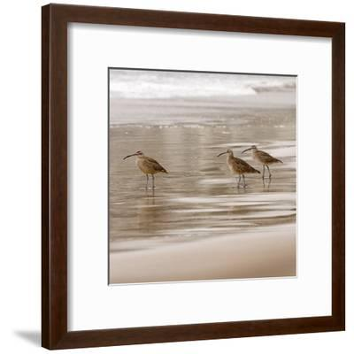 Shore Birds I-Danita Delimont-Framed Art Print