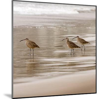 Shore Birds I-Danita Delimont-Mounted Art Print