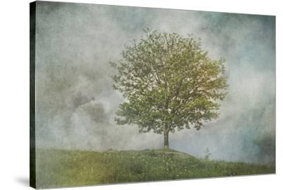 Tree On A Hill--Stretched Canvas Print
