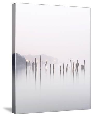 Wood Stalks In Water--Stretched Canvas Print