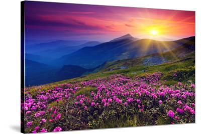 Rhododendron & Summer Mountain--Stretched Canvas Print