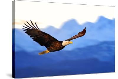 American Bald Eagle Alaska--Stretched Canvas Print