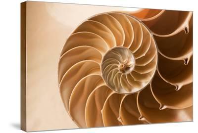 Fibonacci Pattern in a Shell--Stretched Canvas Print