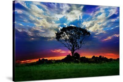 Lonely Tree and Sunset--Stretched Canvas Print