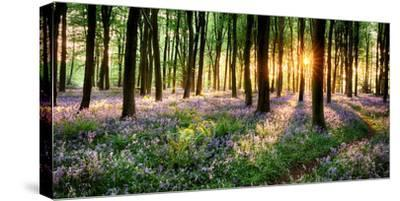 Purple Bluebell Woods Sunrise--Stretched Canvas Print