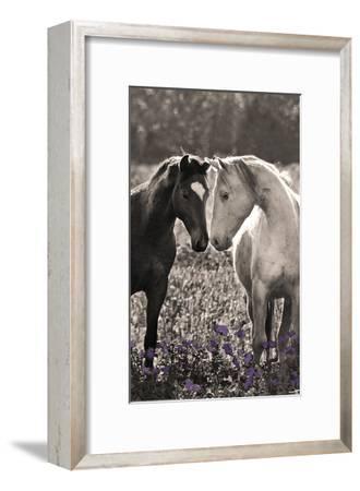 Face to Face-Sally Linden-Framed Art Print