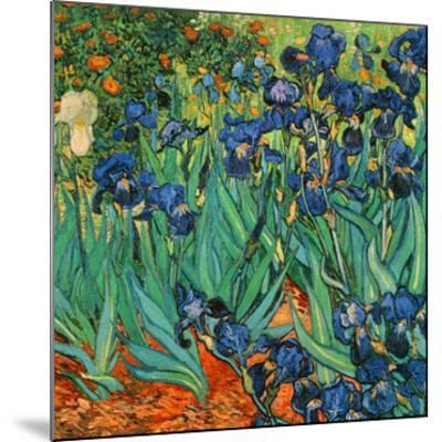 Iris (Détail)-Vincent van Gogh-Mounted Art Print