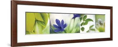 The Garden 5-Florence Delva-Framed Giclee Print