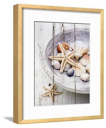 Nantucket Shells IV-James Guilliam-Framed Art Print