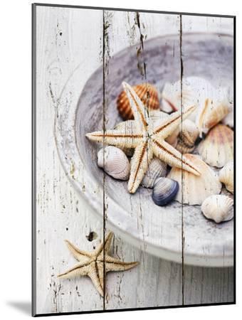 Nantucket Shells IV-James Guilliam-Mounted Art Print