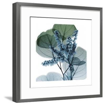 Lilly Of Eucalyptus 2-Albert Koetsier-Framed Art Print
