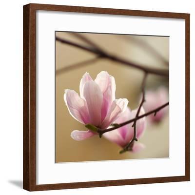 Tulip Tree 1--Framed Art Print