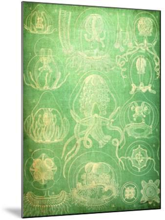 Sealife IV-John Butler-Mounted Giclee Print