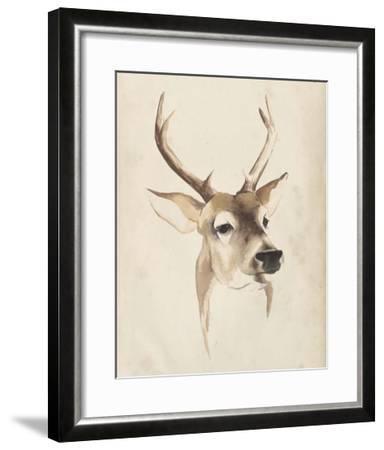 Watercolor Animal Study IV-Grace Popp-Framed Giclee Print