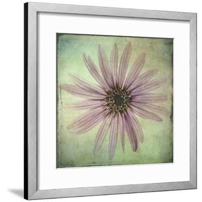 Lush Vintage Florals VIII-Honey Malek-Framed Art Print