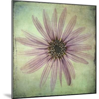 Lush Vintage Florals VIII-Honey Malek-Mounted Art Print