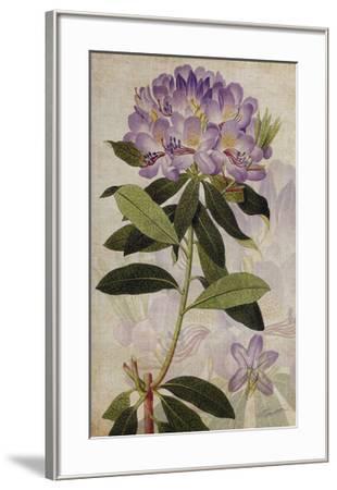 Rhododendron II-John Butler-Framed Giclee Print