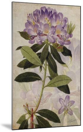 Rhododendron II-John Butler-Mounted Giclee Print
