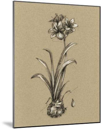 Botanical Sketch Black & White II-Ethan Harper-Mounted Giclee Print