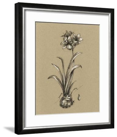 Botanical Sketch Black & White II-Ethan Harper-Framed Giclee Print