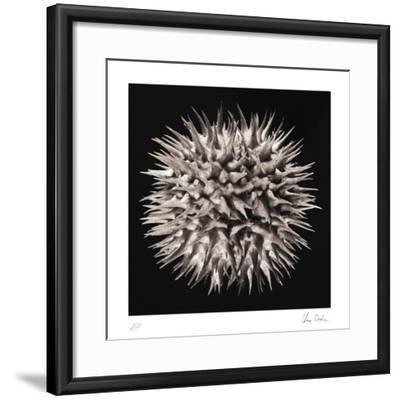Datura I-Chris Dunker-Framed Collectable Print